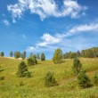 Altai meadows — Stock Photo