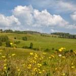 Altai meadows — Stock Photo