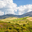 Stock Photo: Altai meadows