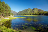 Altai Chemal reservoir — Stock Photo