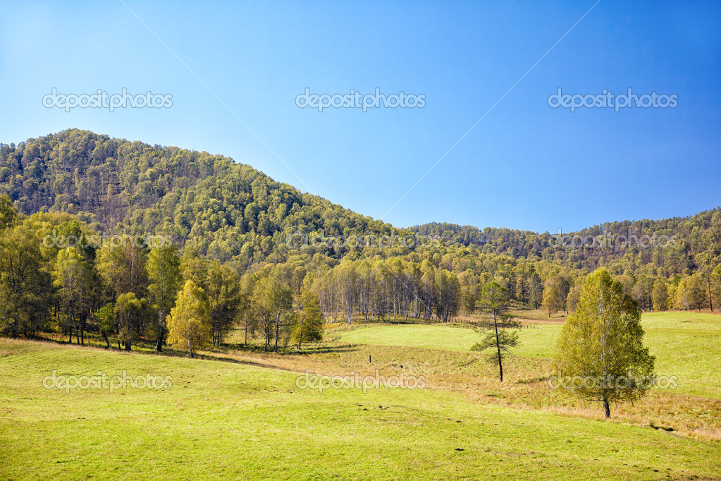 Summer Altai landscape with hills and meadows  — Stock Photo #13107747