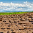 Peat banks of river Kolyma — Stockfoto