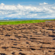 Peat banks of river Kolyma — Stock Photo
