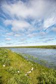 Meadow near river — Stock Photo