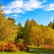 Autumn landscape — Stock Photo #13140168