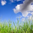 Grass and sky — Stock Photo #13140305