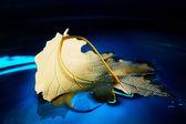 žluté listy na modré vody — Stock fotografie
