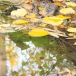 Autumn leaves in water - Stock Photo