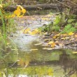 Beautiful autumn river in a tranquil early morning — Stock Video #16497031