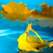 Yellow leaf on blue water — Stock Photo