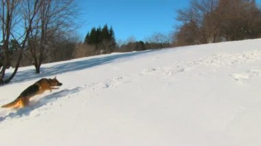 Dog in winter country — Stock Video