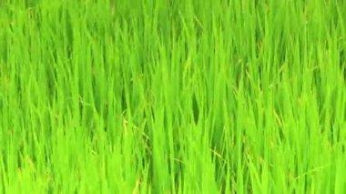Grass — Stock Video
