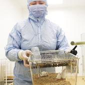 Bioteknik forskare — Stockfoto