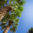 Palm tree — Stock fotografie #36973721