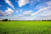 Irrigation canal system in rice field — Stock Photo