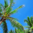Palm trees — Stock Photo #39827613