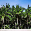 Palm trees — Stock Photo #40129865