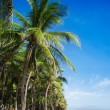 Palm trees — Stock Photo #42837447