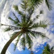 Under Coconut Palms — Stock Photo