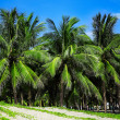 Palm trees — Stock Photo #43356967