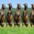Five rear ponies — Stock Photo #13519483