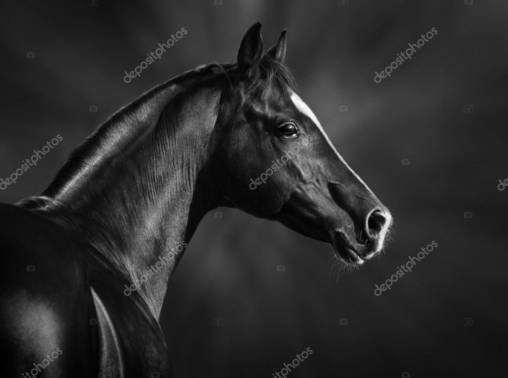лошадь фото черно белое