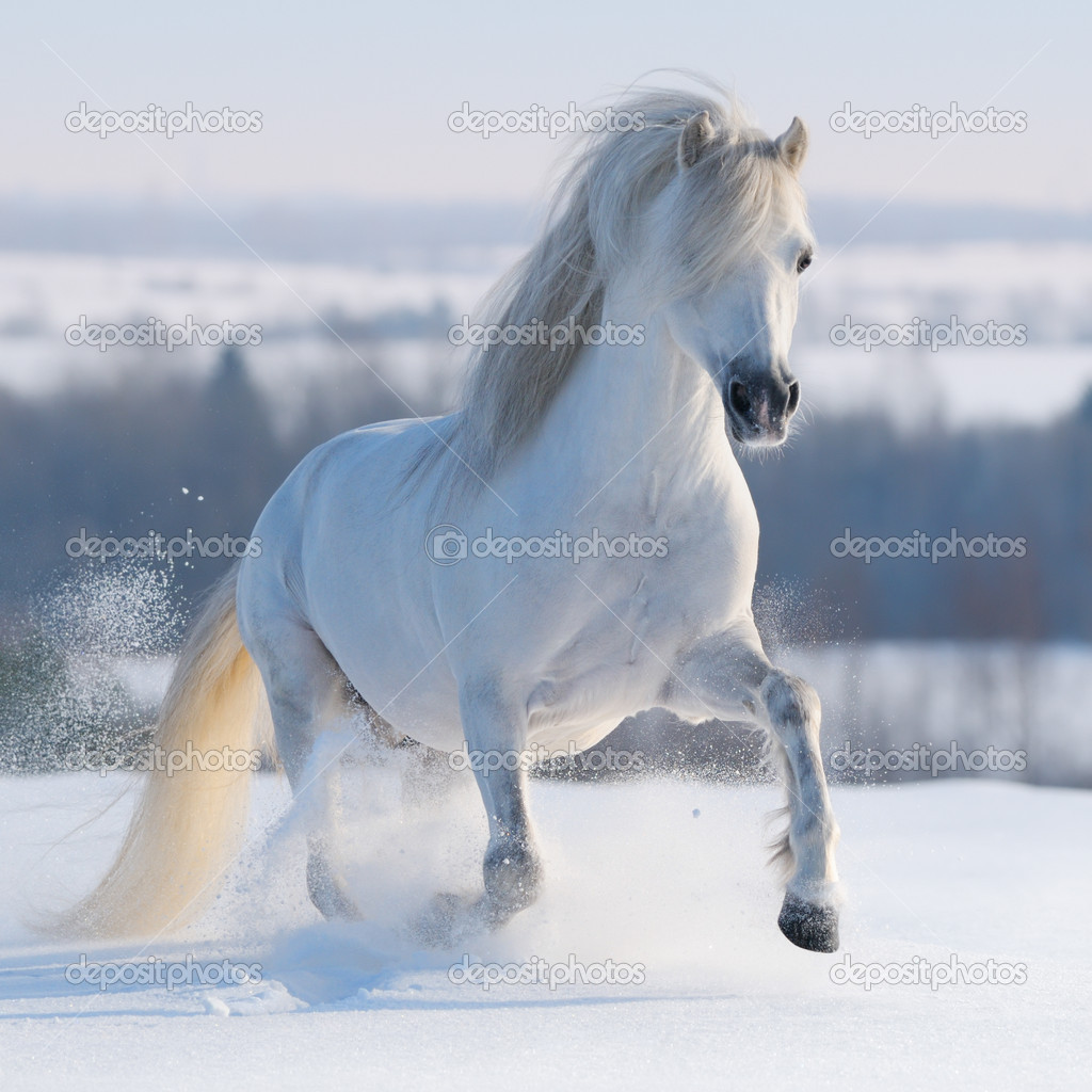 Galloping white horse - photo#19