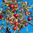 Apple tree with red apples — Stockfoto