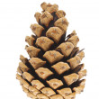 Pine cone isolated — Stock Photo #14048574