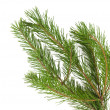 Pine branches isolated — Stock Photo #14048938