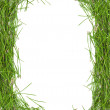 Frame of green pine needles — Stock Photo