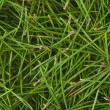 Royalty-Free Stock Photo: green pine needles