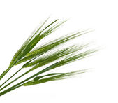 Green ears of wheat isolated — Stock Photo