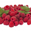 Ripe raspberry isolated — Stock Photo #15528329