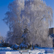 Trees in frost in the park  — Stock Photo