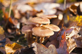 Fall mushrooms — Stock Photo