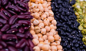 Legume collection — Stock Photo