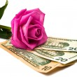 Stock Photo: Dollars with rose isolated