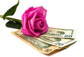 Dollars with a rose isolated — Stock Photo