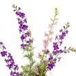 Wild flowers isolated — Stock Photo #19535279