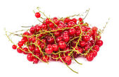Branch of red currant — Stock Photo