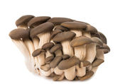 Oyster mushrooms isolated — Stock Photo