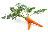 Carrots with the leaves — Stock Photo