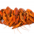 Crayfish - Foto de Stock