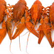 Crayfish isolated - Stok fotoraf