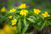 Wild spring flowers — Stock Photo