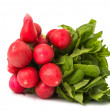 Radish bunch isolated — Foto Stock