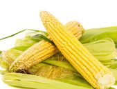 Corn on the cob — Foto de Stock