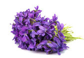 Violet flower isolated — Stock Photo
