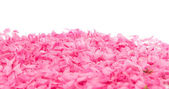 Small pink flower petals — Stock Photo